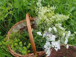 Košík s bylinkami