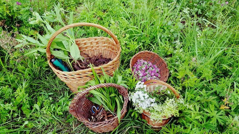 košíky s bylinkami